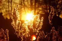 Minha Luz