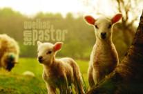 Sem Pastor!