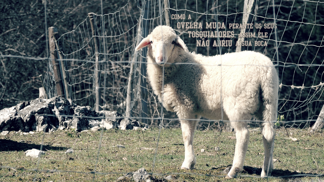 wallpaper cristão hd como ovelha muda perante seus tosquiadores assim ele não abriu a sua boca_1366x768