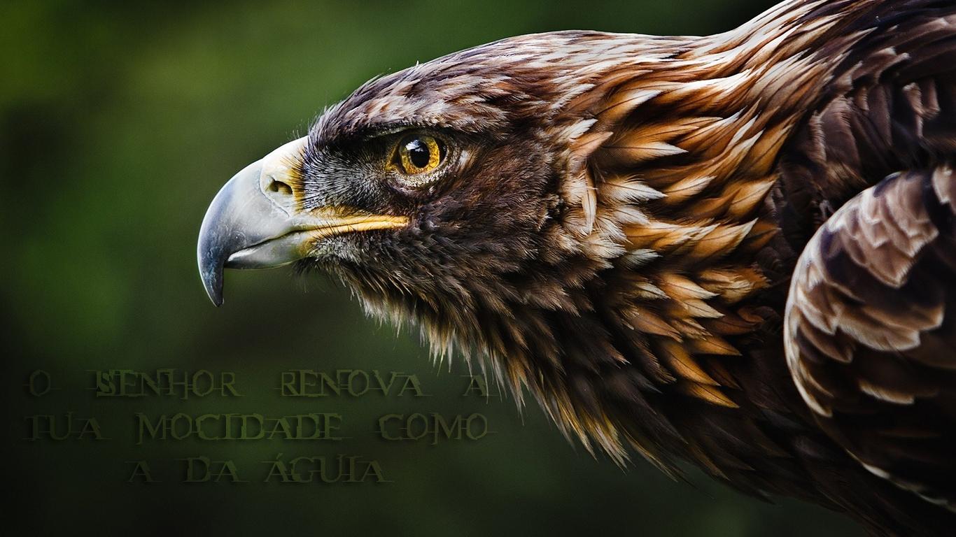 wallpaper cristao hd Senhor renova mocidade como águia_1366x768