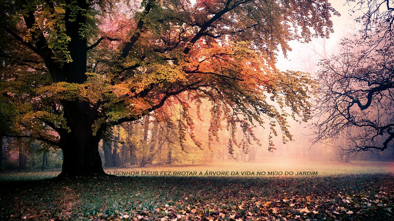 wallpaper cristao hd Senhor Deus fez brotar árvore vida meio jardim_1366x768