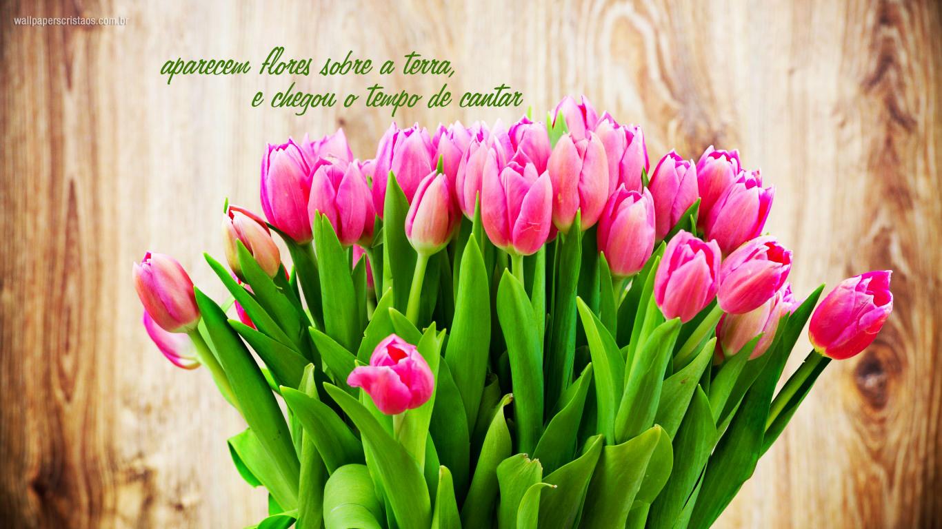wallpaper cristao aparecem flores sobre terra chegou tempo cantar tulipas_1366x768