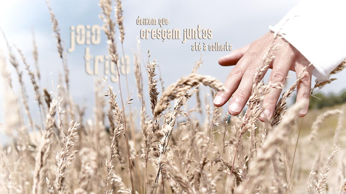 wallpaper cristao hd joio trigo deixem cresçam juntos até colheita mão_1366x768