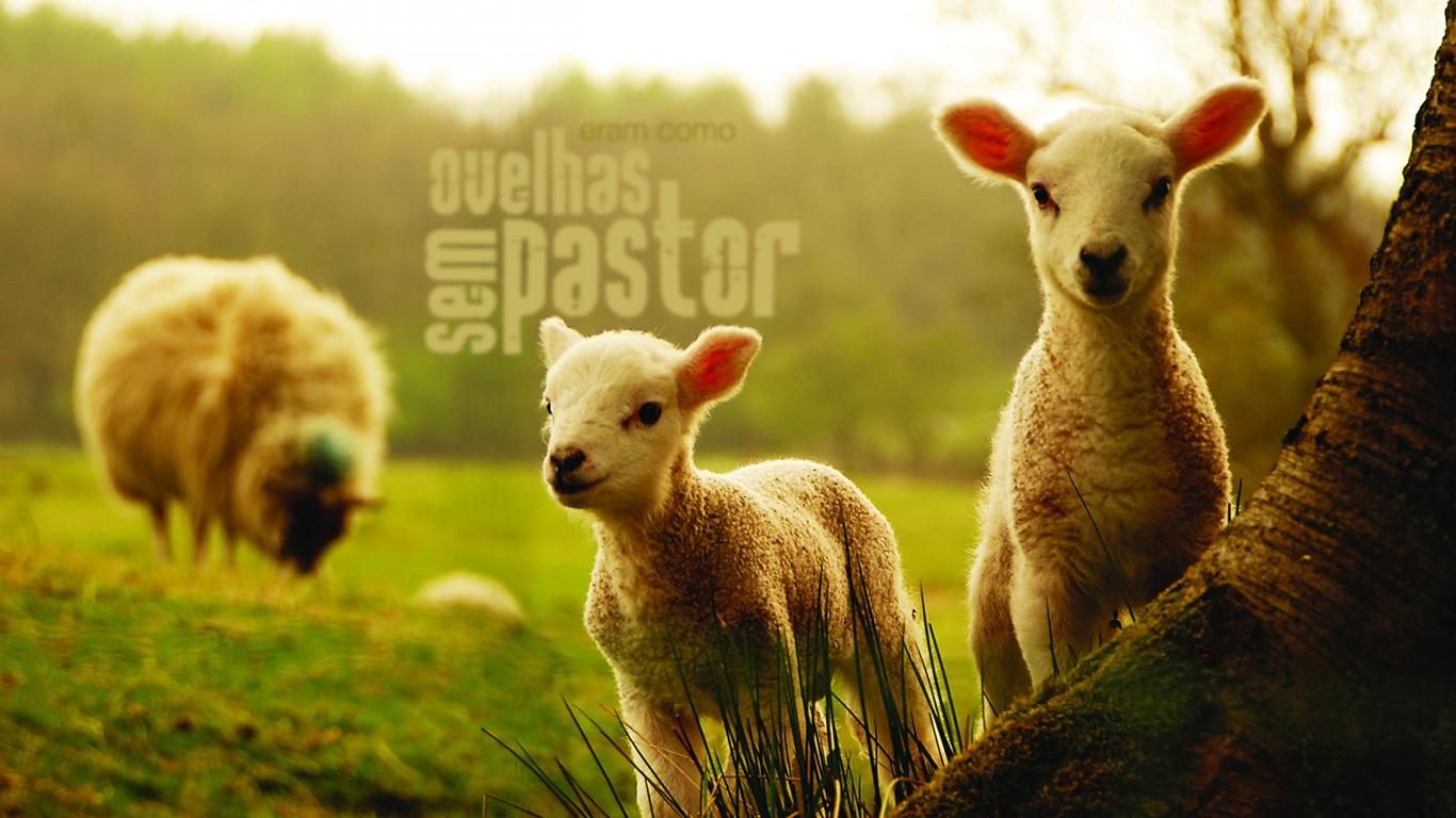 wallpaper cristao hd eram como ovelhas sem pastor_1366x768