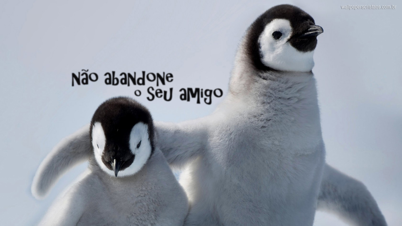 wallpaper cristao hd não abandone amigo pinguins_1366x768