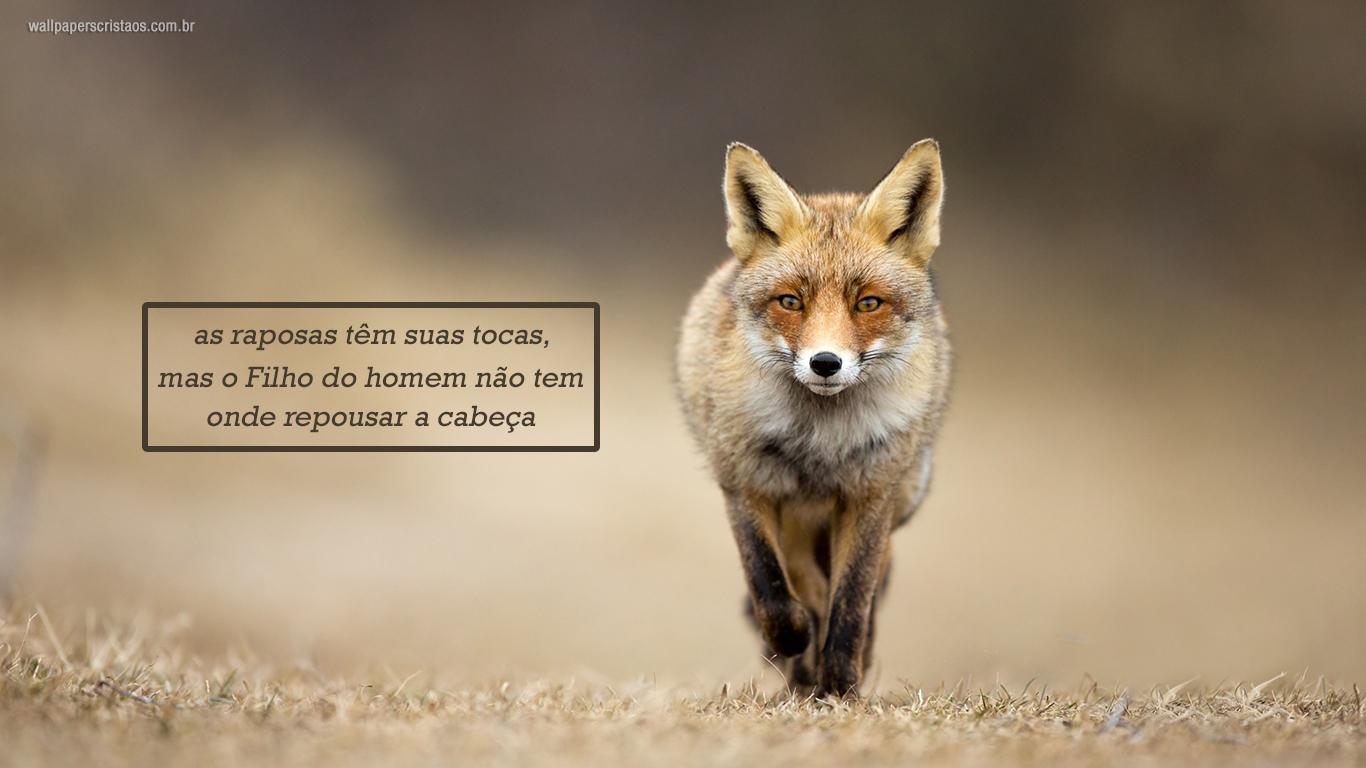 wallpapers cristao hd as raposas têm suas tocas, mas o Filho do homem não tem onde repousar a cabeça_1366x768